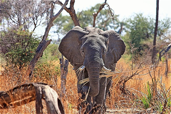 The Kruger Park is the perfect place to see wildlife like Elephants up close. With your experienced guide, he knows exactly where to go for wildlife encounters