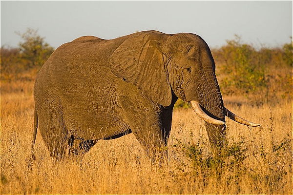 Elephants are majestic and complete a safari