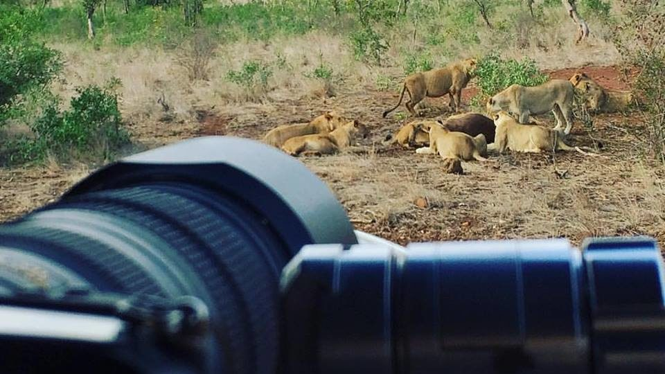 Book a Private Photo Safari In the Kruger National Park today